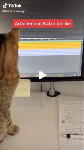 Screenshot eines TikTok Videos, in dem eine Katze auf einen PC Monitor schaut